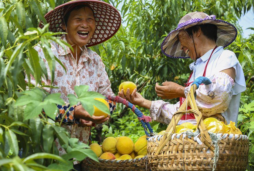 这些丰收民俗你一定要看 丰收让人忙,也让人乐 在中国广袤的大地上 各地流传着形式各异的庆丰收民俗 谷神节