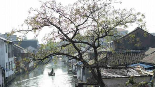 """嘉青松:上海西郊哪一幅""""江南画卷""""更能打动你(下)"""