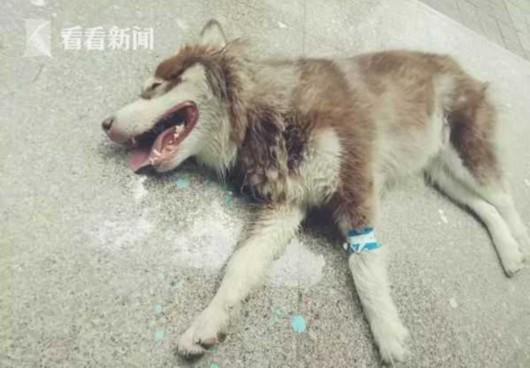 多条狗误食含粉末物体火腿肠死亡 疑人为投毒