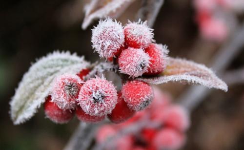 辽宁昨夜最低温2℃ 局部地区有霜