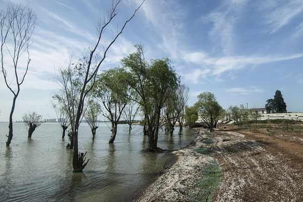 合肥:初秋时节 巢湖芦溪湿地景色迷人