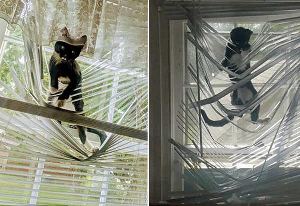 萌趣十足!淘气小猫爬挂百叶窗进退不能