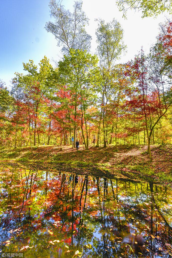 撩人秋色已上线 北纬45度尝鲜秋季美景