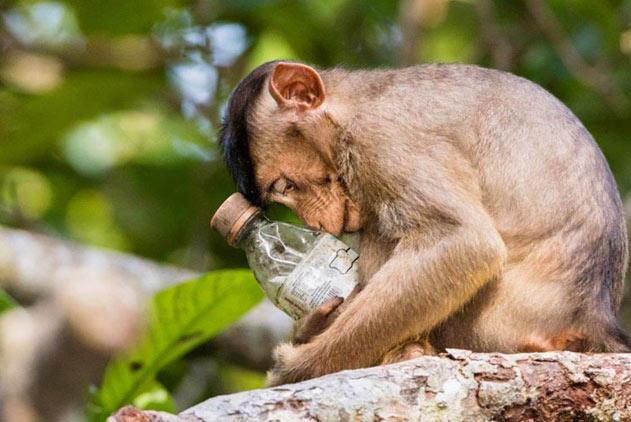 自然环境摄影师大赛获奖佳作 反思人类生存现状
