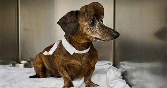 兽医使用3D打印植入技术为狗狗更换头骨
