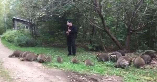 美国男子林中吹奏神秘旋律 吸引近20只浣熊