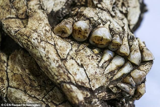 巴西建筑工地发现6000年前亚洲人类尸骼