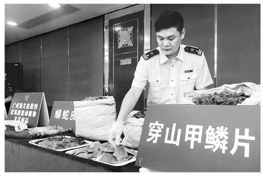 广州海关查获7吨穿山甲鳞片 上万只穿山甲遭猎杀