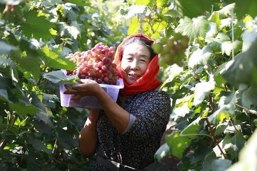 山西大同西韩岭村通过发展特色种植业实现脱贫致富