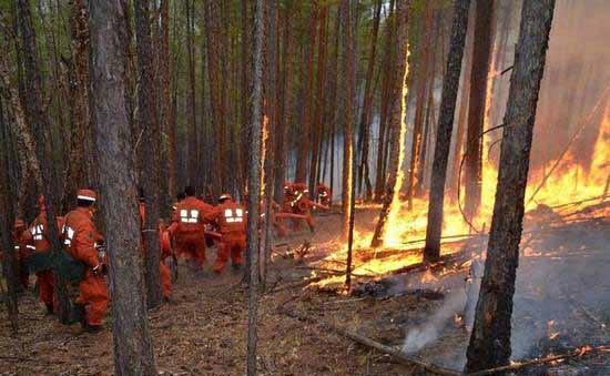 一年损失几百亿 森林防火何解:无人机或是良方