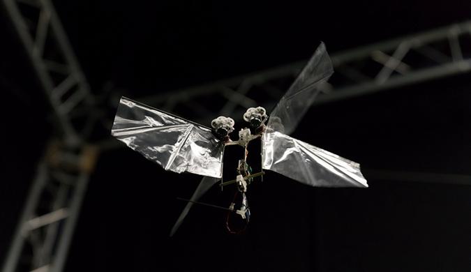 荷兰科学家研发超灵活昆虫机器人 1小时可飞25公里