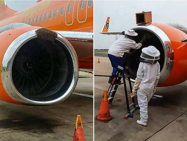 南非机场客机上惊现蜂群 致3个航班延误