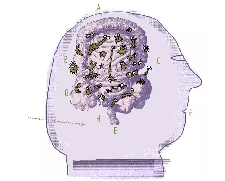 "《Science》新研究:肠脑快速""通信""!健康长假最新指南"