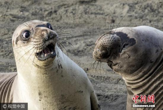 """男子划船时遭海豹用章鱼""""打脸"""" 专家:它是在觅食"""