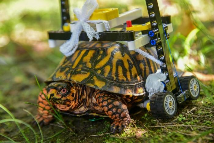 乐高爱好者打造定制轮椅助腹甲受伤乌龟康复
