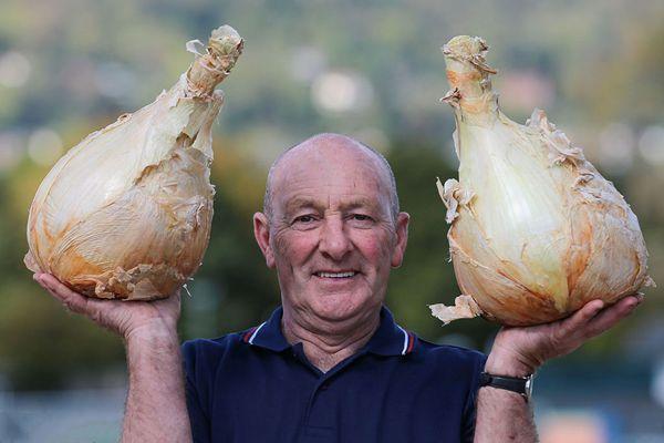 英国年度巨型蔬菜大赛 各类蔬菜界巨无霸重磅来袭