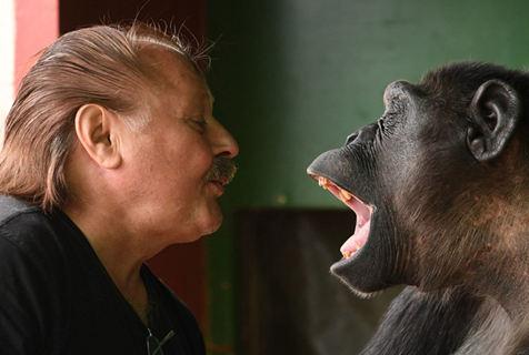 德国马戏团大猩猩与饲养员互动 顽皮有爱