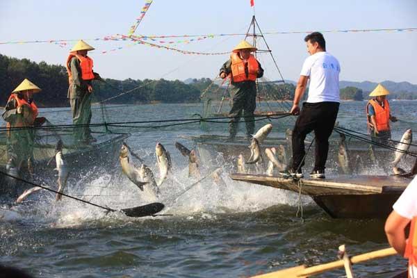 水库开渔丰收 36斤头鱼拍得68800元