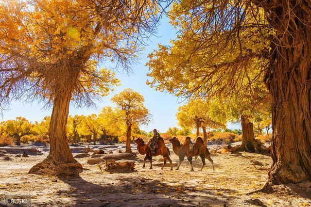 全国季节性最强的景区,每年只开一个月