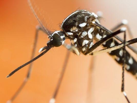 美一州遭受飓风之后出现超大型蚊子 个头为普通蚊子三倍
