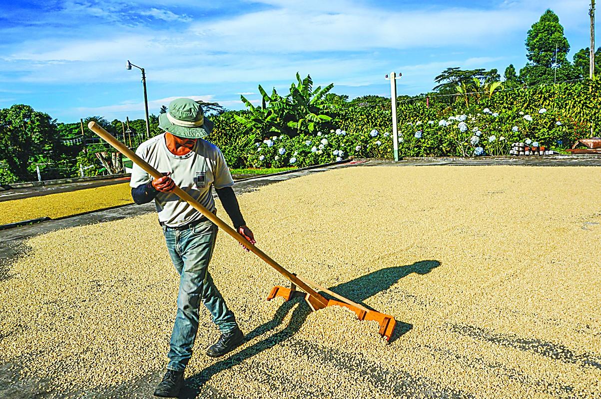 在哥斯达黎加见证咖啡飘香