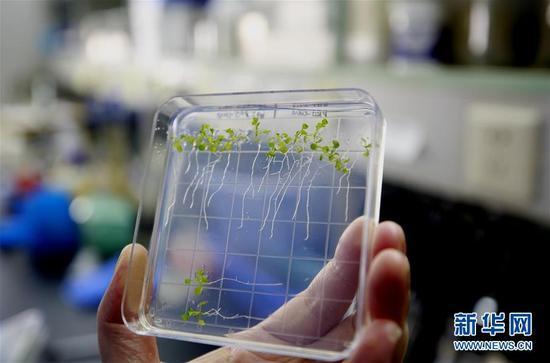 太空种粮种菜开花结果 中国完成植物生长全过程实验