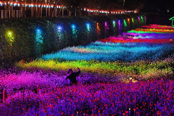韩国平昌举办盛大庆典 游客徜徉彩灯花海