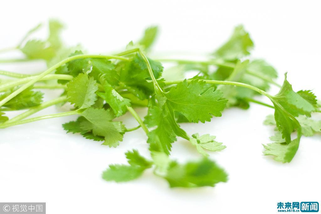 香菜在我国已有2000多年的种植历史 是发汗透疹、消食下气的好东西