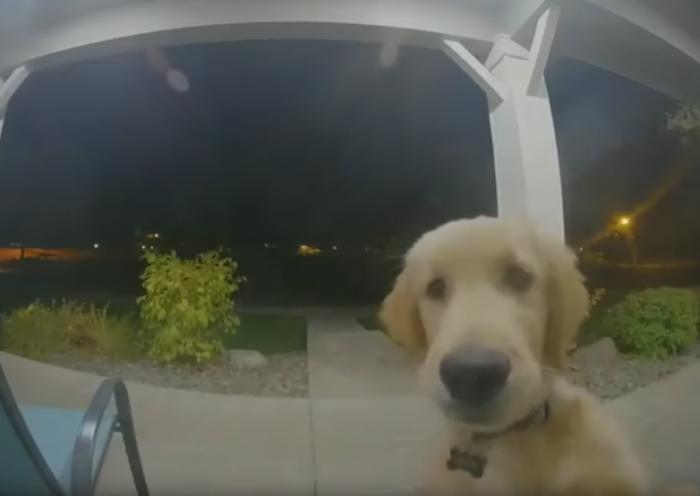 狗狗被关在门外 成功用智能视频门铃通知主人