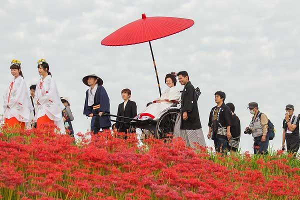 日本神社秋季盛典举行日式传统婚礼 新娘坐黄包车穿过花海