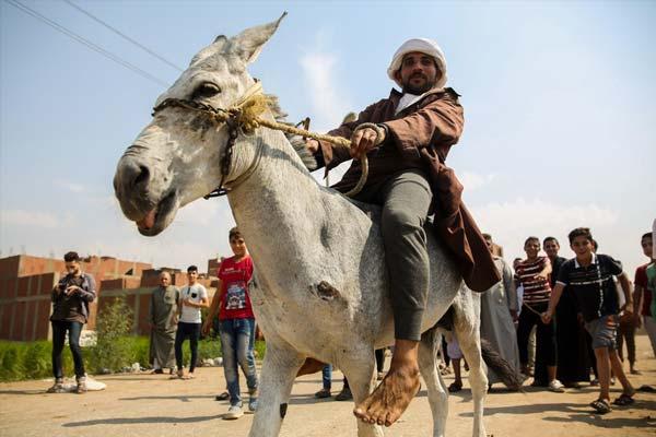 埃及村子举办驴子赛跑 村民骑驴狂奔