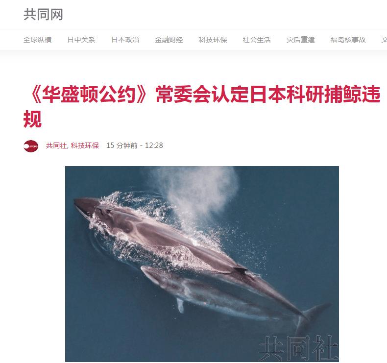 """日媒:《华盛顿公约》常委会认定日本""""科研捕鲸""""存在违规行为"""