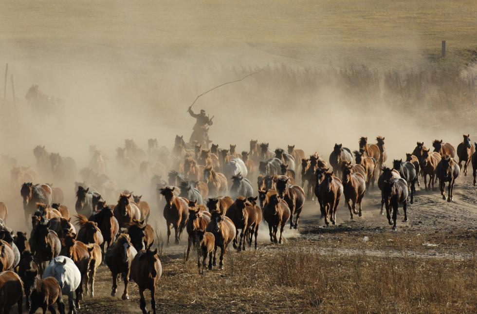 壮观!去内蒙古大草原看群马奔腾