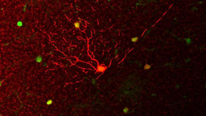 人类和其他哺乳动物是如何获得夜视能力的?