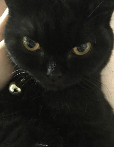 """猫咪的眼睛""""自带美瞳""""又黑又亮 其中的秘密你知道吗?"""