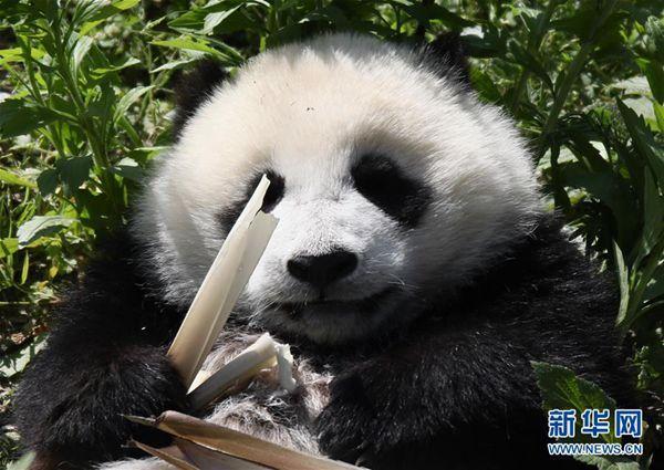 """十一出境游火爆 但不少外国人却来中国寻找""""诗和远方"""""""