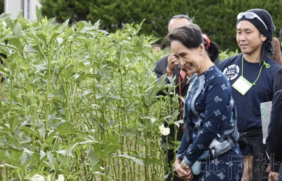 昂山素季访问日本,在福岛观摩当地农业称值得多多学习