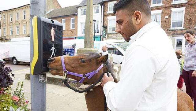 全能导盲马 找邮箱、挑衣服还能引导过街