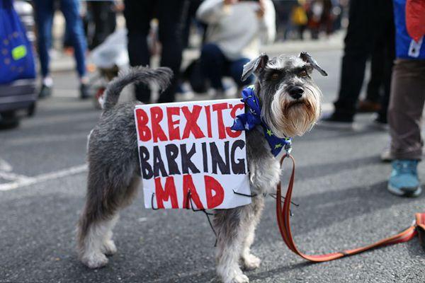 """英国伦敦举行""""狗狗公投""""集会 汪星人齐聚反对脱欧"""