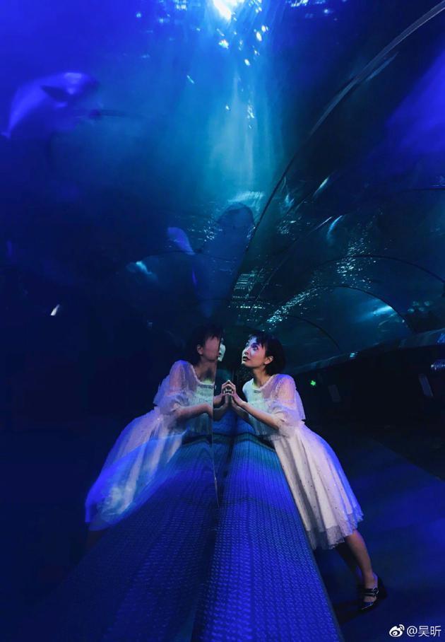 吴昕一袭白裙畅游海洋馆 与动物互动画面很梦幻
