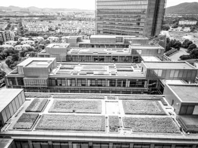 楼顶种绿植变空中花园