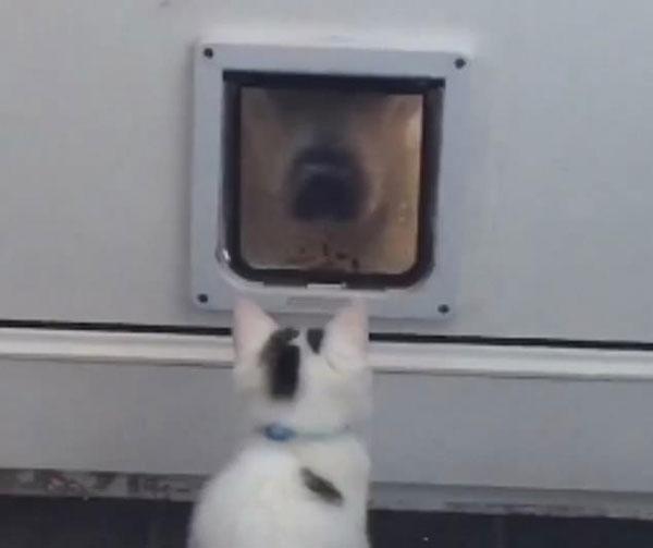 霸气!喵星人大战汪星人坚决阻挠其钻猫洞