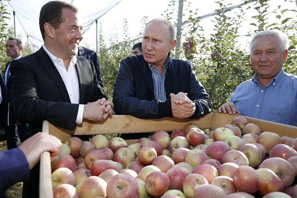普京和梅德韦杰夫一同视察地方 参观苹果园