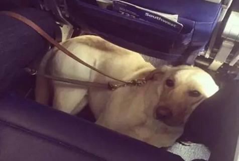 狗狗:有机票就是可以为所欲为