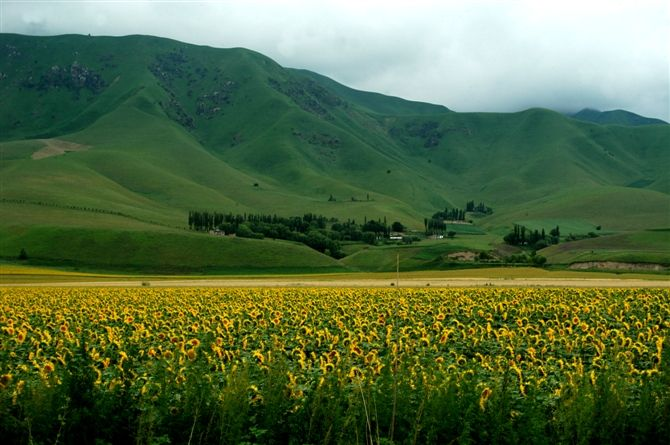 """荒漠上筑起""""绿色长城""""——新疆阿克苏地区生态治理纪实"""