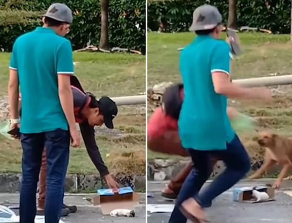 泰国两男子欲救狗宝宝 遭狗妈妈猛扑吓跑