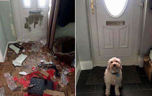 猎犬不忍孤独咬碎木门寻找主人 造成上万元损失