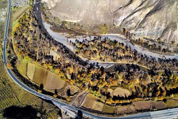 航拍甘肃肃南隆畅河畔 蓝色河流辉映金色树林