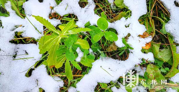 亚布力迎今秋首场雪 即将开启滑雪狂欢季