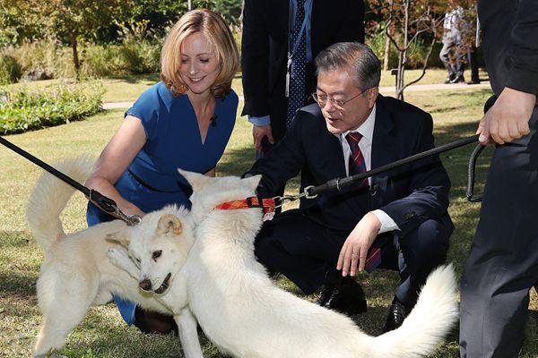 文在寅接受BBC采访 与记者一同逗朝鲜所赠丰山犬